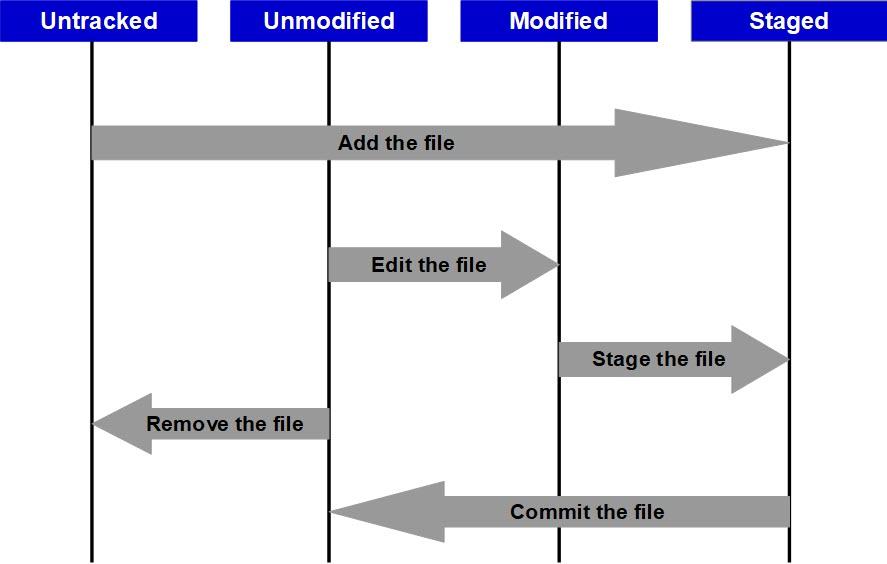 Basic Git Workflow